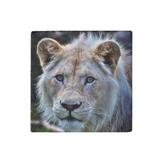 Big Cat Rare White Lion Wildlife Photo Portrait Stone Magnet