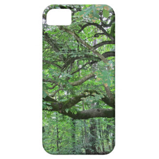 Big chestnut tree iPhone 5 cover