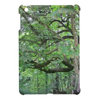 Big chestnut tree iPad mini covers