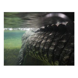 Big Crocodile Postcard