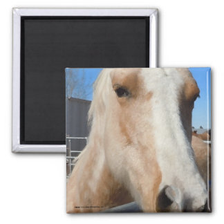 Big Dark Eyes Golden Blond Palomino Pony Magnet