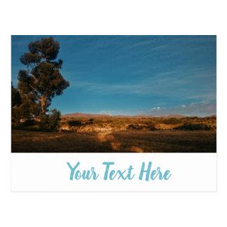 Big Eucalyptus Tree Beautiful Landscape Postcard