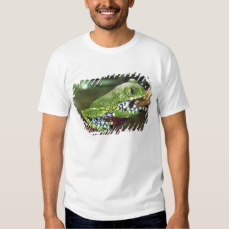 Big Eye Treefrog, Leptopelis vermiculatus, T Shirts