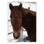 Big Eyes Red Tennessee Walking Horse -  TWH Blank Greeting Card