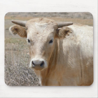 Big Eyes White Charolais Cattle - Western Mouse Pad