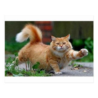 Big Fat Orange Cat Postcard