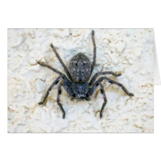 Big_Female_Huntsman_Spider,_Greeting_Card. Greeting Card