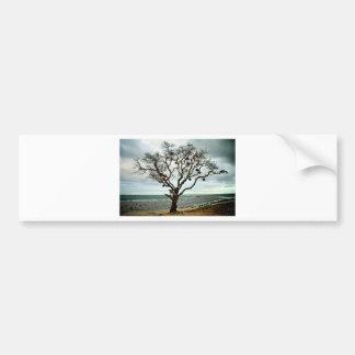 Big Fish tree Bumper Sticker