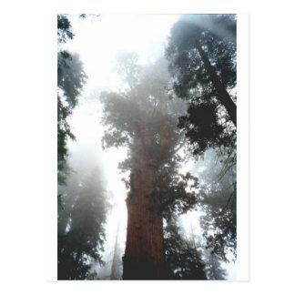 Big Fog Tree Postcard