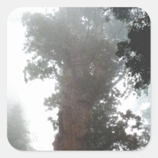 Big Fog Tree Square Sticker