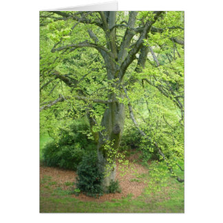 Big Green Tree Greeting Card