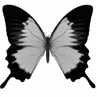Big Grey & Black Butterfly Photo Sculpture Decoration