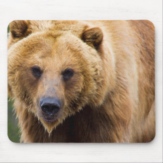 Big Grizzly Bear Close Enough Mouse Pad