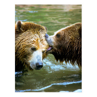 Big Grizzly Bear Kiss Postcard
