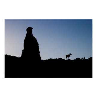 Big Horn at Colorado National Monument Poster