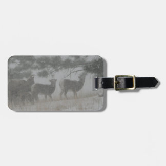 Big Horn Kid in the Snowstorm Tags For Bags