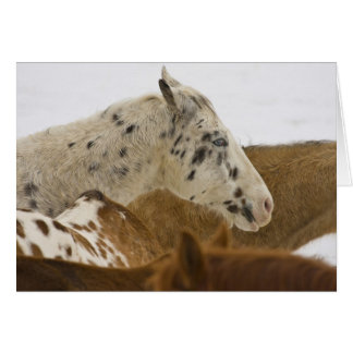 Big Horn Mountains, Horses in The Snow Card