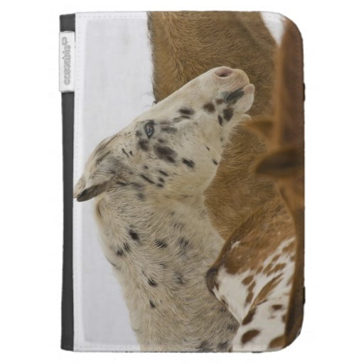 Big Horn Mountains, Horses in The Snow Kindle Covers
