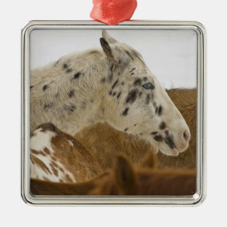 Big Horn Mountains, Horses in The Snow Ornament