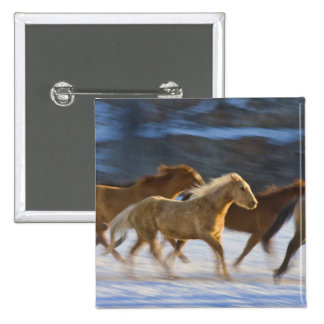 Big Horn Mountains Horses running in the snow 2 Pinback Buttons