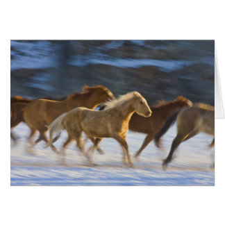 Big Horn Mountains, Horses running in the snow 2 Card