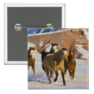 Big Horn Mountains, Horses running in the snow 3 15 Cm Square Badge