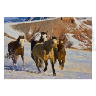 Big Horn Mountains, Horses running in the snow 3 Greeting Card