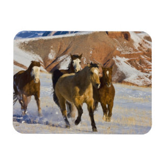 Big Horn Mountains Horses running in the snow 3 Flexible Magnets