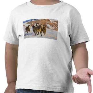 Big Horn Mountains, Horses running in the snow 3 T-shirts