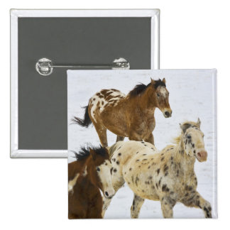 Big Horn Mountains, Horses running in the snow 4 15 Cm Square Badge