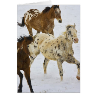 Big Horn Mountains, Horses running in the snow 4 Card