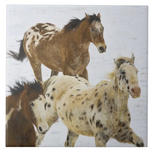 Big Horn Mountains, Horses running in the snow 4 Tiles
