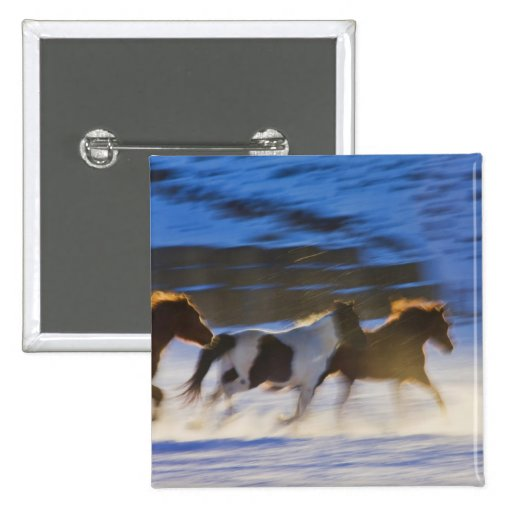 Big Horn Mountains, Horses Running in the Snow Buttons
