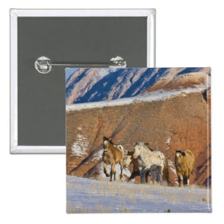 Big Horn Mountains Horses running in the snow Pinback Button
