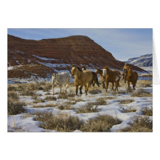 Big Horn Mountains, Horses Running in The Snow Card