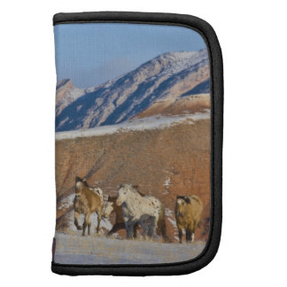 Big Horn Mountains, Horses running in the snow Folio Planners