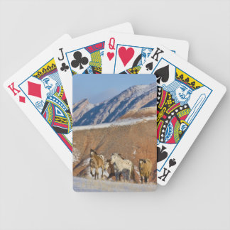 Big Horn Mountains, Horses running in the snow Bicycle Card Deck