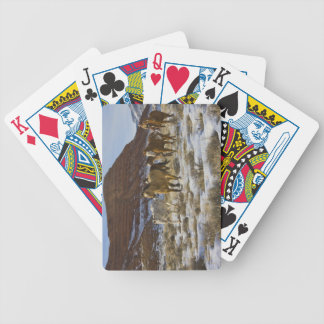 Big Horn Mountains, Horses Running in The Snow Poker Cards