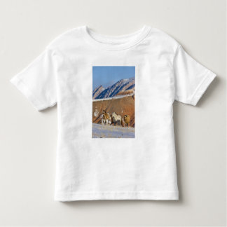 Big Horn Mountains, Horses running in the snow T-shirts