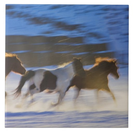 Big Horn Mountains, Horses Running in the Snow Tiles