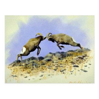 Big Horn Postcard