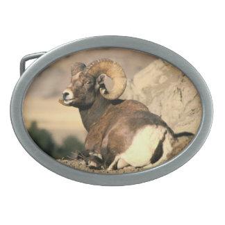 Big Horn Ram - American Mammal Collection Belt Buckles