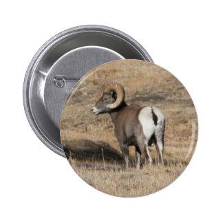 Big Horn Ram Pins