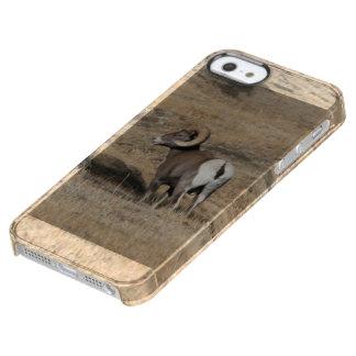 Big Horn Ram Clear iPhone SE/5/5s Case