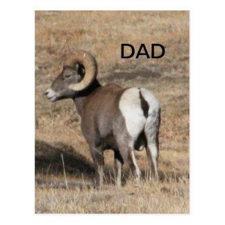 Big Horn Ram Dad Post Card
