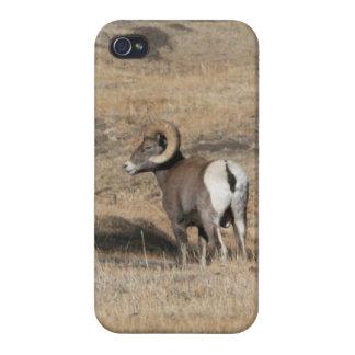 Big Horn Ram iPhone 4 Cases
