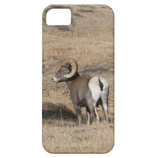 Big Horn Ram iPhone 5 Cover
