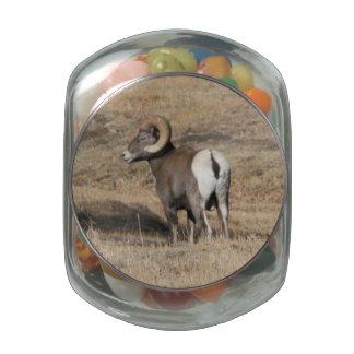 Big Horn Ram Glass Jar