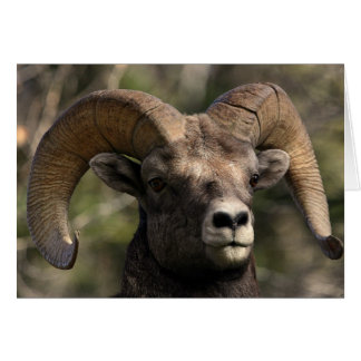Big Horn Sheep3 Stationery Note Card