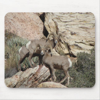 Big Horn Sheep at Red Rock Mouse Pad